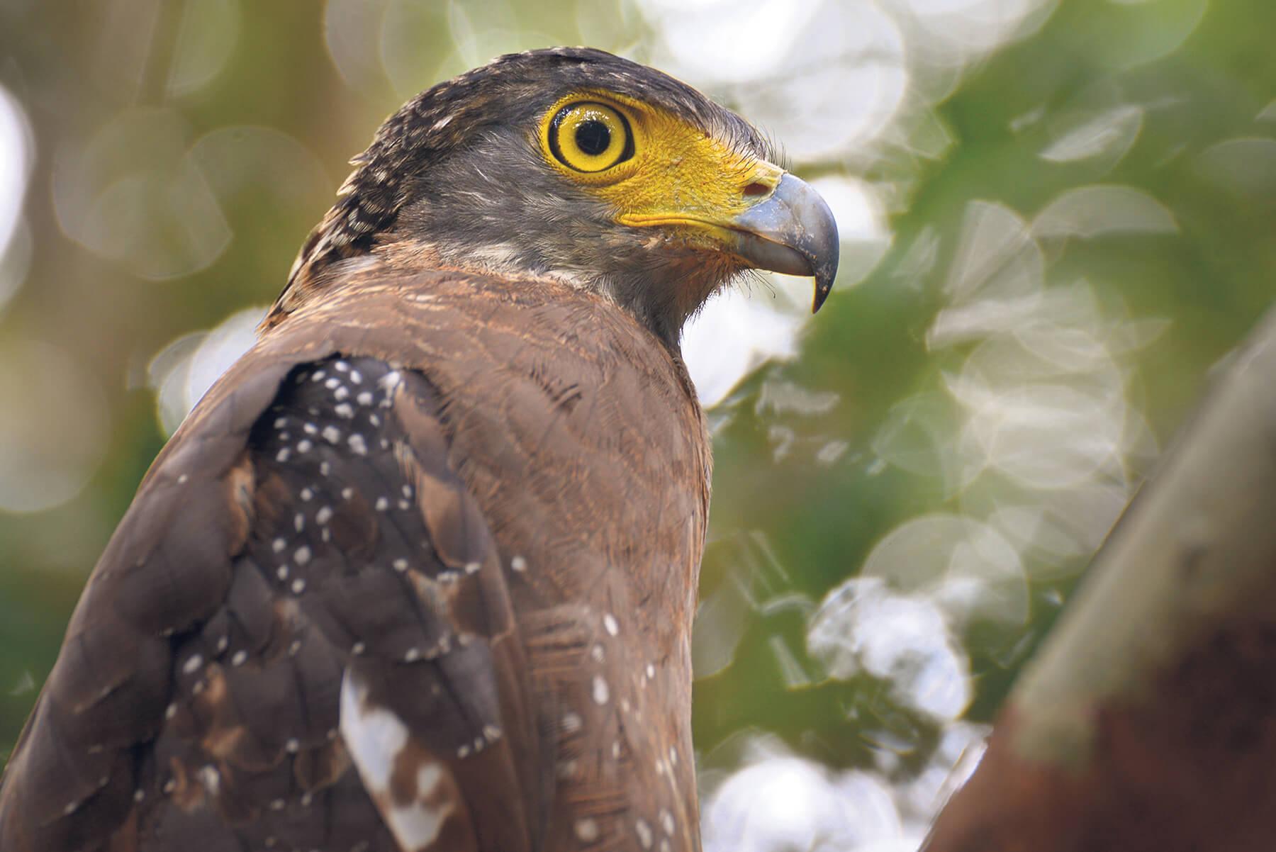 Telephoto lens wildlife