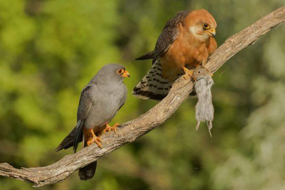 SINWP Bird Photographer of the Year winners announced