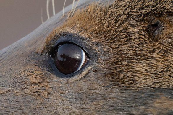Sony A7R IV eye AF test and trade-in bonus