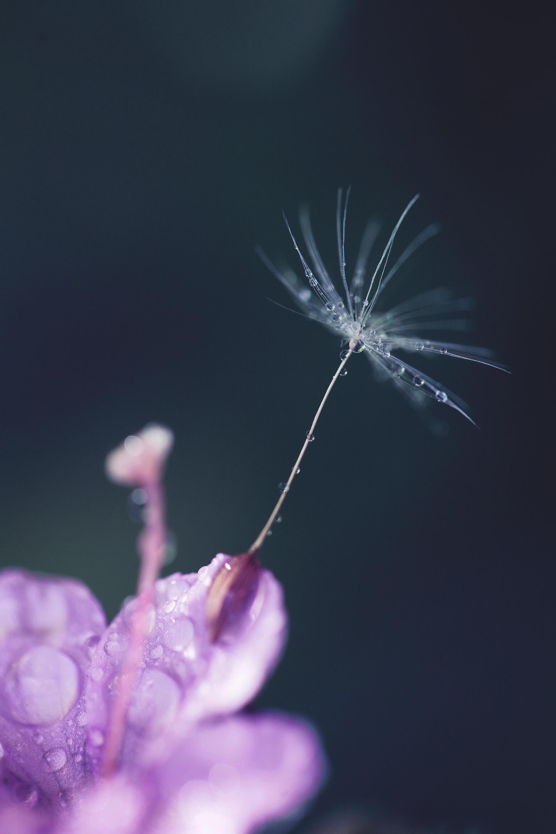 Macro photo of dew on flower