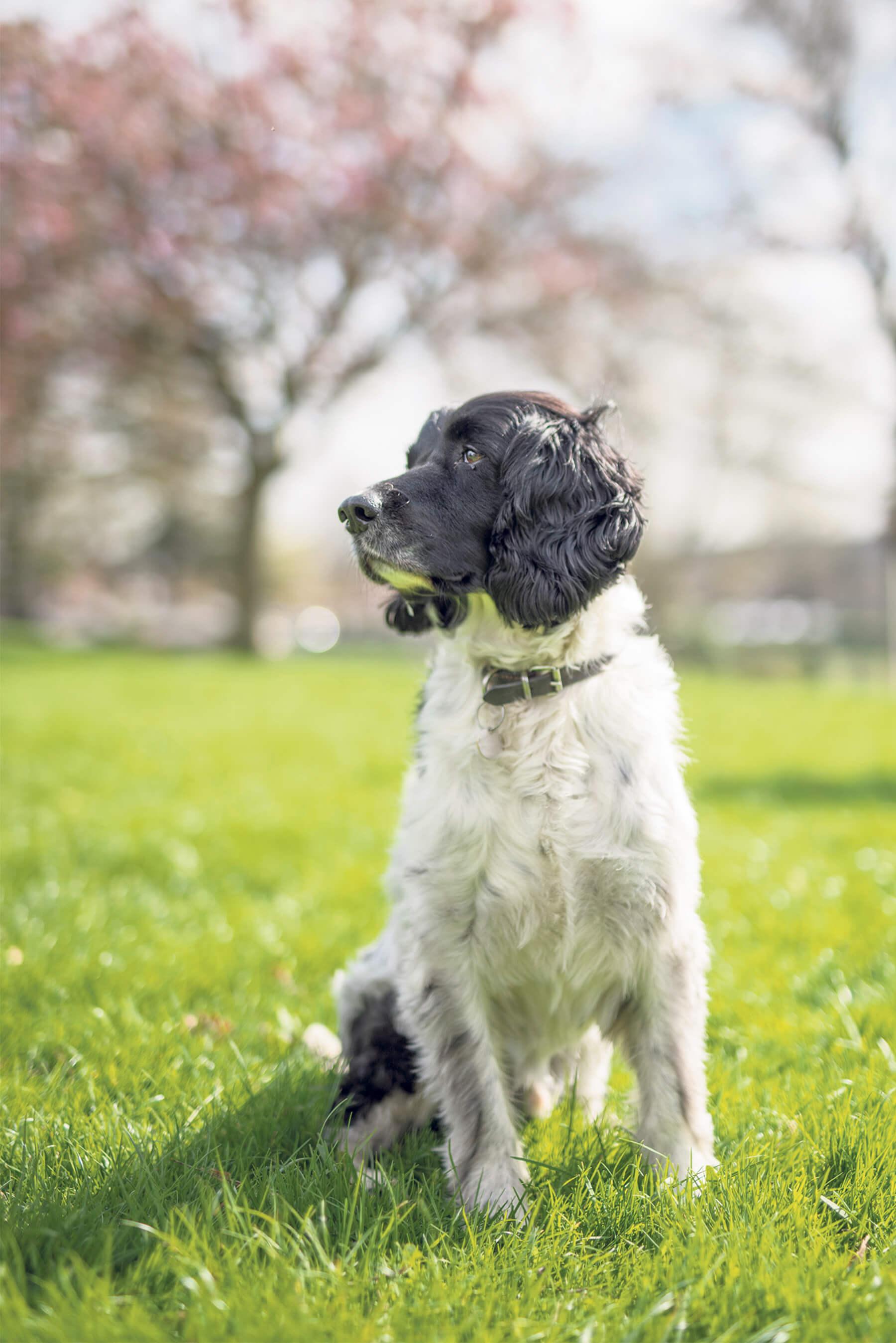 Standard lens portrait of dog